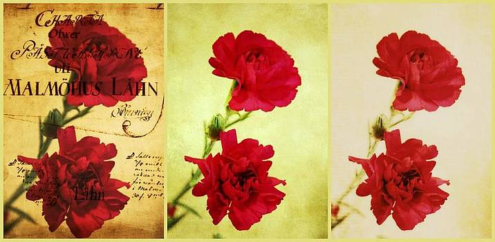 Red Carnations by Cathie Tyler