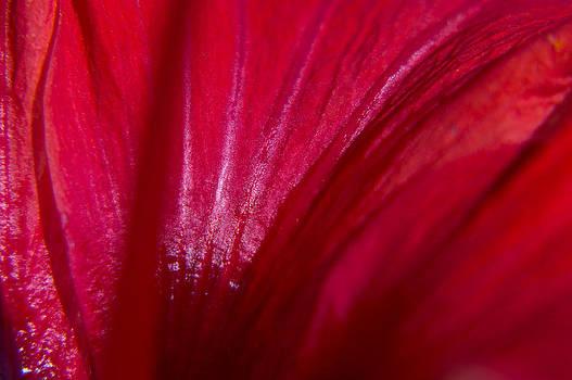 Red by Daniel Kulinski