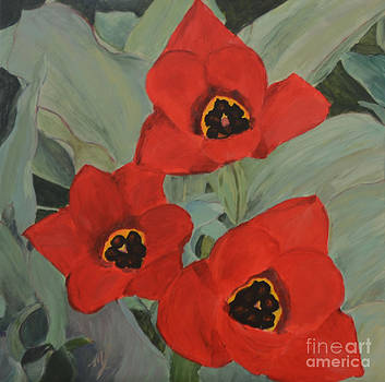 Red Emperor Tulip Study by Marlene Petersen