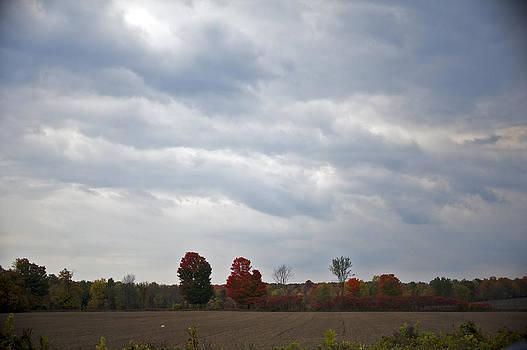 Elaine Mikkelstrup - Red Fall