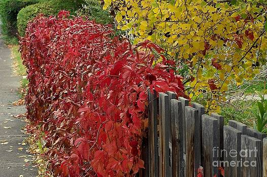Red Fence by Dorrene BrownButterfield