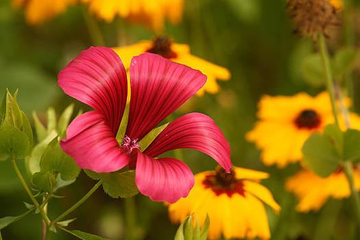 Red flower by Erik Tanghe