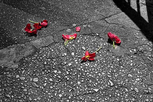 Red Flower on Street by Bennie Reynolds