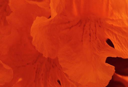 Gilbert Artiaga - Red Flowers