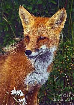 Diane Kurtz - Red Fox