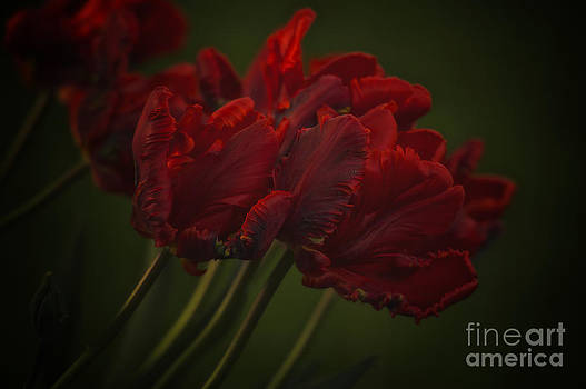 Red Glow by Diane Smith