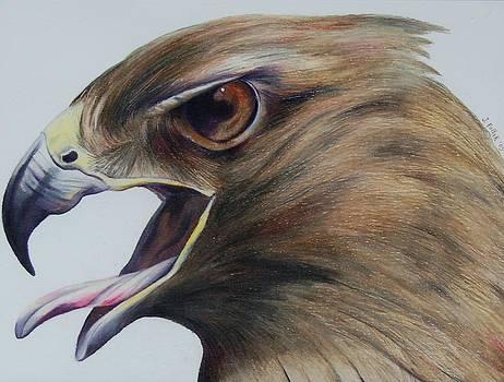 Red Hawk by Joan Pollak