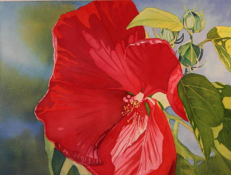 Red Hibiscus by Cynthia Sexton