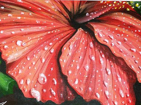 Red Hibiscus by John Westerhold