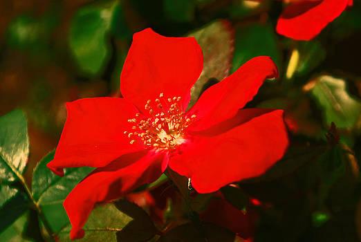 Michelle Cruz - Red Inspiration