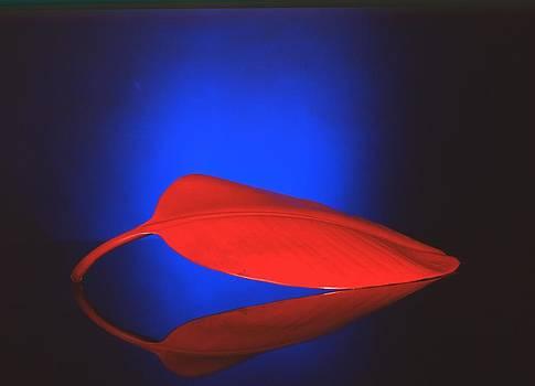 Red Leaf by Larry Van Valkenburgh