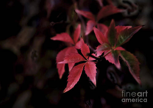 Red Leaves by Glennis Siverson