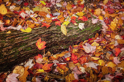 Red Leaves Over Log 6193  by Ken Brodeur
