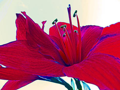 Red Lilly by Mamie Thornbrue