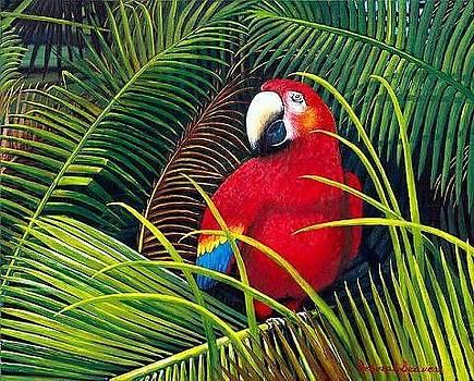 Red Macaw by Deborah Beaver