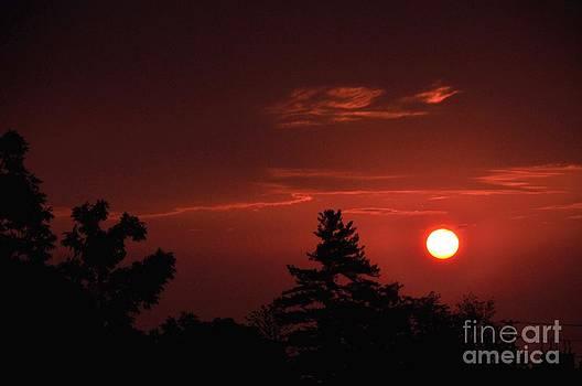 Red Moon at Night by Lisa  DiFruscio