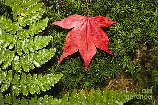 Red on Green by George Hodlin