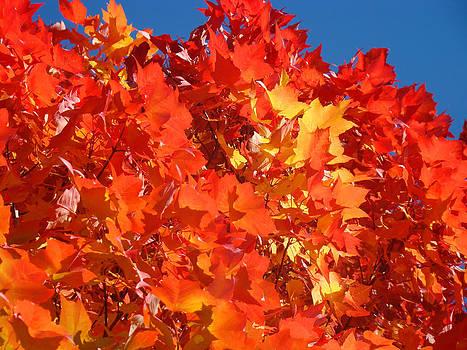 Baslee Troutman - Red Orange Yellow Autumn Leaves art prints Vivid Bright