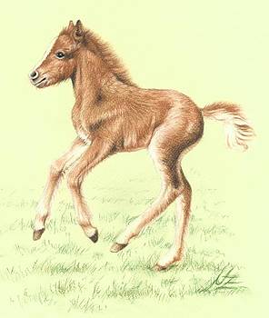 Red Pony Foal by Nicole Zeug