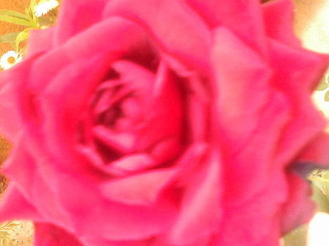 Red Rose by Amisha Tripathy