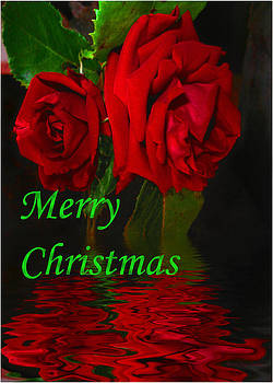 Joyce Dickens - Red Rose Reflected - Merry christmas