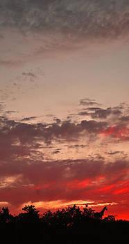 Michelle Cruz - Red Skies