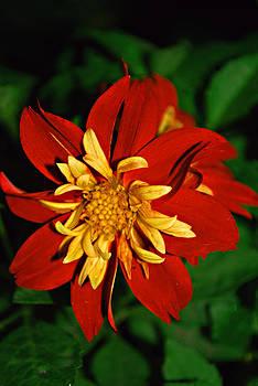 Michelle Cruz - Red Spice