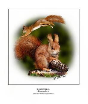 Red Squirrel by Owen Bell