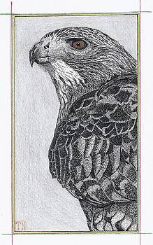 Red Tail Hawk Head Study by Tony  Nelson