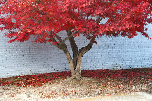 Affini Woodley - Red Tree Horizontal