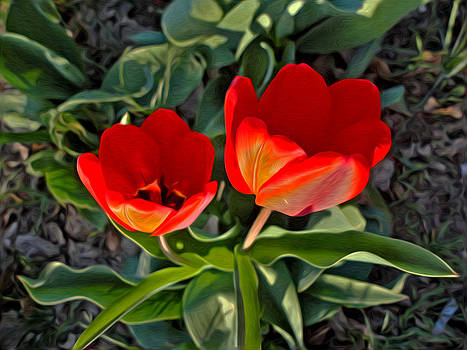 Red Tulips at Sunset by Sergio Aguayo