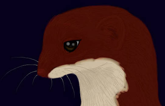 Red Weasel Face by Verity Grayson
