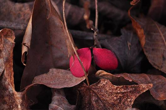 Red Whisper  by Gwen  Dubeau