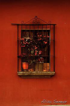 Red Window by Alisa Seneor
