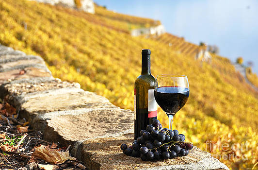 Red wine and grapes by Alexander Chaikin