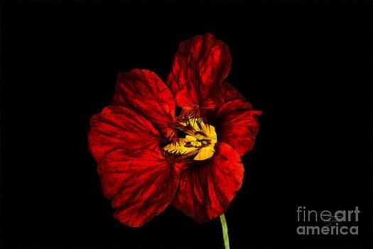 Cris Hayes - Red Wrinkles