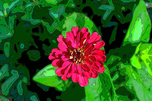 Red Zinnia by Bob Whitt
