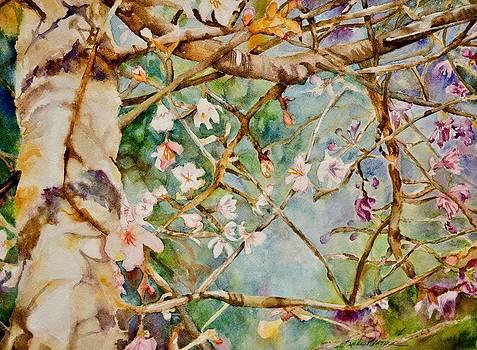 Redbud in Spring by Linda Broome