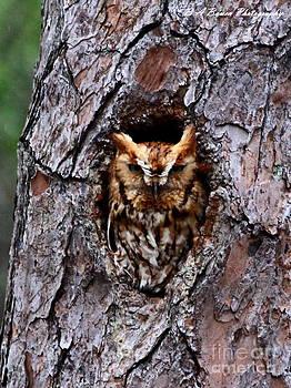 Barbara Bowen - Reddish Screech Owl