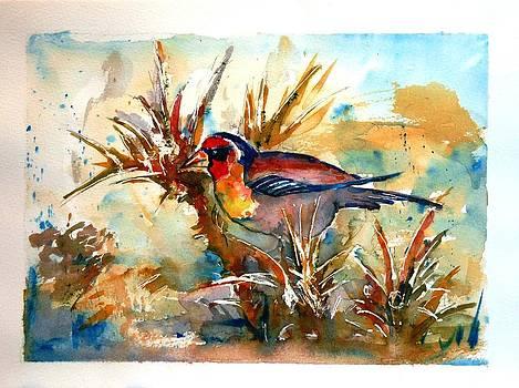 Redface bird by Baruch Neria-Kandel
