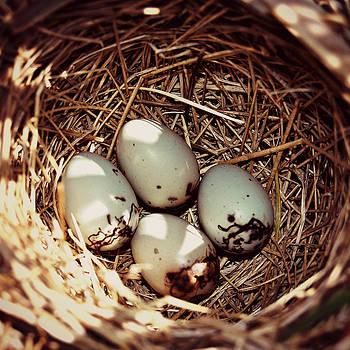 Redwing Blackbird Eggs by Amy Schauland