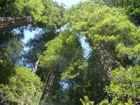 Baslee Troutman - Redwood Trees Forest Fine Art Prints
