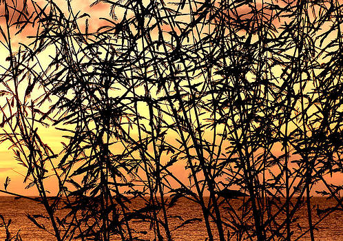 Stuart Brown - Reeds And Sunset