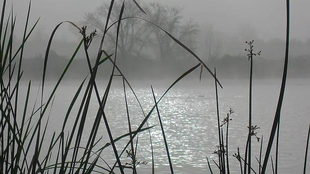 Reeds in Fog by Diane Austin