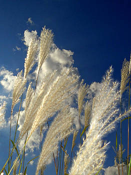 Reeds on a sunny day by Bruce Ritchie