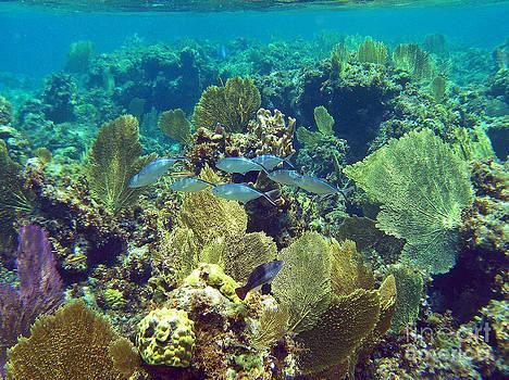Li Newton - Reef Life