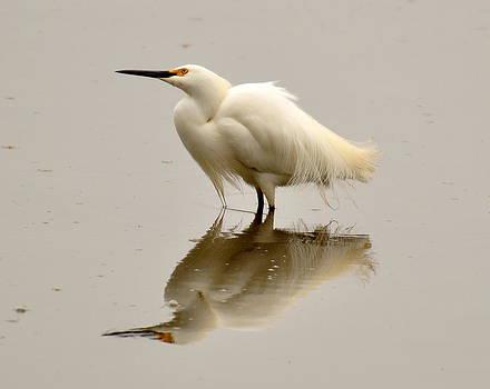Reflecting Egret by Pamela Rose Hawken