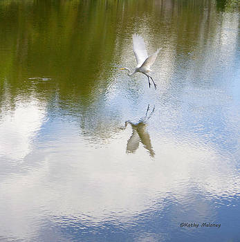 Reflection by Kathy Maloney