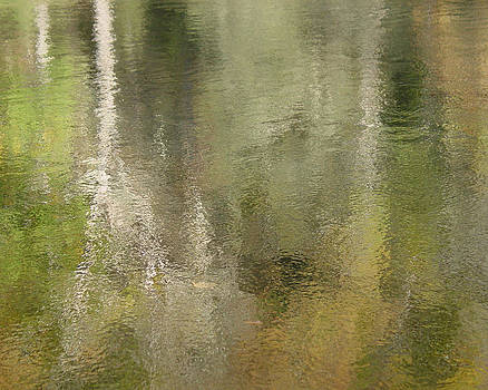 Reflections by Carol Phipps