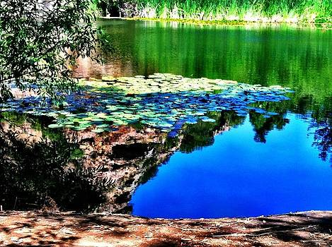 Reflections by Lisa  Wilkinson